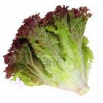 Lettuce Lollo Rosso 350g